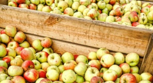 Związek Sadowników zaleca ograniczanie dostaw jabłek przemysłowych