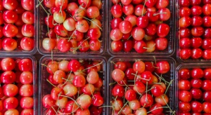 Rynek czereśni i wiśni w UE: Polska liderem produkcji, Hiszpania - eksportu