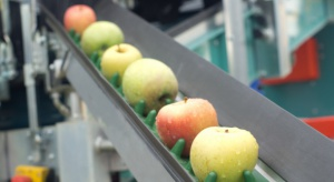 Zmieniła się struktura geograficzna eksportu jabłek z Polski