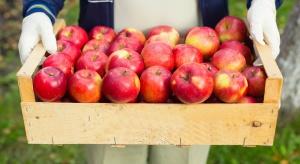 KE zapowiada wzrost stawek za wycofanie owoców i warzyw z rynku od 2017 r.