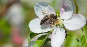 """Krasnoludki na wrocławskim rynku też wspierały akcję """"Adoptuj pszczołę"""""""