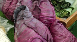 Kapusta o stożkowym kształcie podbije krajowy rynek warzyw?