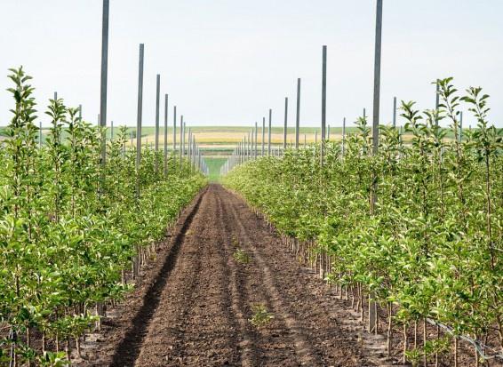W obwodzie Kaliningradzkim powstanie 250 hektarów sadu