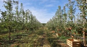 Nawożenie sadów jabłoniowych po zbiorze owoców