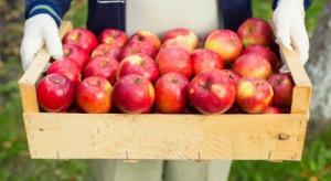 Polskie jabłka docenione na gruzińskim rynku