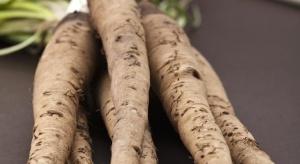 Salsefia - warto uprawiać mniej znane warzywa