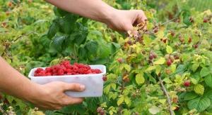 Sejm przyjął nowelę o dopłatach bezpośrednich - bez dopłat do produkcji malin