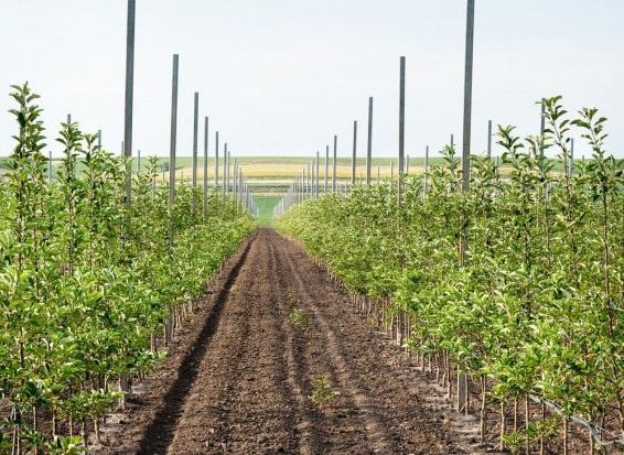 Jakich drzewek poszukują sadownicy w obecnym sezonie?