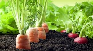 W UE uprawy ekologiczne zajmują ponad 11 mln hektarów