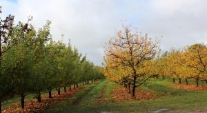 Zabiegi mocznikiem jesienią