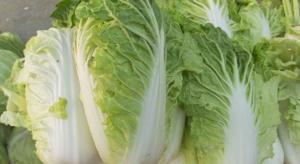 Jak chronić uprawy warzyw aby zapobiec stratom podczas przechowywania?