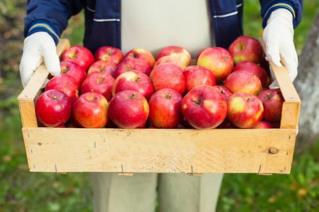Amber Foods: W ciągu 2 miesięcy zamierzamy sprzedać kilkaset ton jabłek do Chin