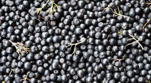 Plantatorzy aronii: Potrzebne są umowy, które dadzą gwarancję ceny i zbytu