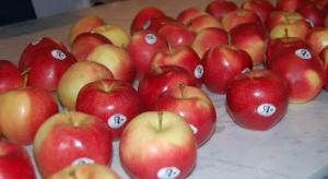 Stowarzyszenie Sady Grójeckie rozwija sprzedaż jabłek ChOG. W planach ekspansja zagraniczna