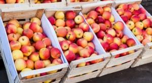 Spadła produkcja jabłek we Francji