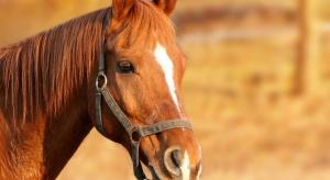 Podlaskie: Gospodarz chce odszkodowania za konia przekazanego wojsku w 1939 r.
