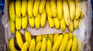 CBŚP przechwyciło 4 kg kokainy w przesyłce bananów z Kolumbii