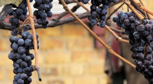 ARR przypomina o deklaracjach producentów i przedsiębiorców wyrabiających wino