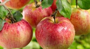 Polskie jabłka muszą przyspieszyć światową ekspansję