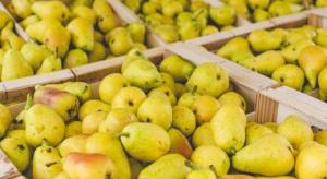 Większa produkcja gruszek na świecie