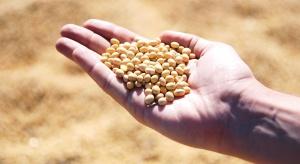 Brak dopłat do ubezpieczenia upraw warzyw na nasiona