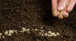 Po fuzji Bayer i Monsanto chcą zainwestować 16 mld dolarów w rolnictwo
