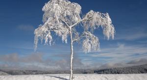 Usuwanie drzew i krzewów - wyjaśnienia resortu środowiska dot. zmiany ustawy