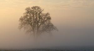 Pogoda na 21 i 22 stycznia: Marznące mżawki, deszcze ze śniegiem, mgły