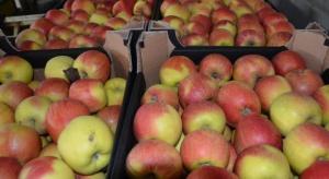 Rosyjskie służby utylizowały 60 ton jabłek pochodzących z Polski