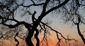 Kiedy można usunąć ze swojej nieruchomości każde drzewo?