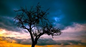 Rolnik może wyciąć drzewo bez pozwolenia pod budowę domu; pod stodołę już nie