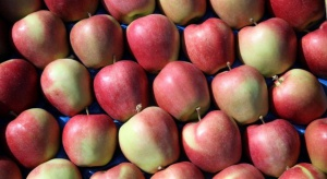 Jakie mamy szanse na zwiększenie podaży jabłek na rynek europejski?