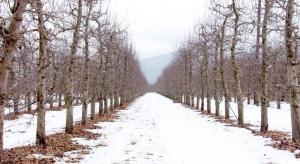 W całej Polsce solidny mróz. Synoptycy zapowiadają opady śniegu