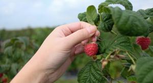 Lubelskie: Rolnictwo największym sektorem zatrudniającym Ukraińców