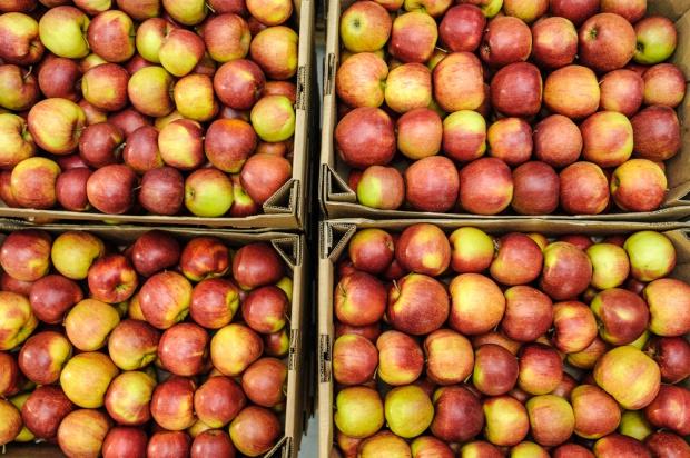 Ceny jabłek deserowych wahają się między 0,80 a 1,4 zł/kg