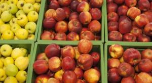 Mimo wysokich zapasów jabłek ich ceny sukcesywnie rosną