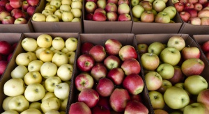 Unia Europejska nie chce polskich jabłek. Warto walczyć o ten rynek?