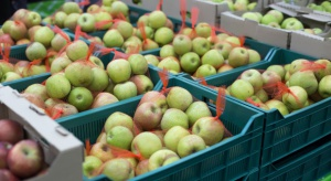 Jabłka dobrze się sprzedają, choć cena jest fatalna