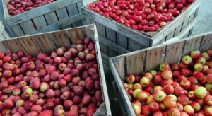 Ewa-Bis: Polskie jabłka mają szansę stać się unikatowym produktem w Indiach