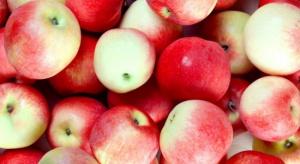 Rynek jabłek: To kolejny trudny sezon dla sadowników?