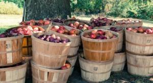 WAPA prognozuje wzrost zbiorów jabłek na półkuli południowej