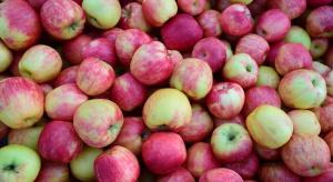 Jak obecnie kształtują się ceny jabłek deserowych?