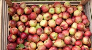Ceny jabłek ustabilizowały się. Nie jest to dobry sygnał w tym okresie