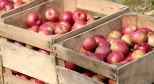 Jagieliński: Gdyby niektórzy sadownicy nie zbijali cen, to nie byłoby tak źle
