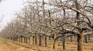 Kontrola wzrostu drzew – cięcie korzeni