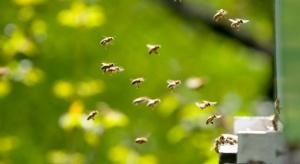 Naukowcy: Rośliny dostosowują się do rodzaju zapylających je owadów