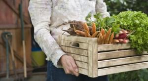 Produkcja ekologiczna się opłaca! Rynek stale się rozwija