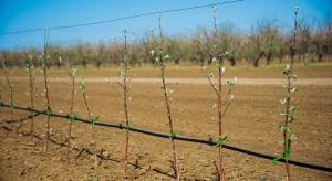 Dobre przygotowanie gleby ma kluczowe znaczenie w sadach ekologicznych
