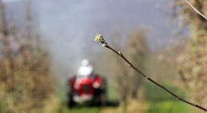 Gąsienice licinka tarninaczka i zwójkówki liściowe aktywne w sadach