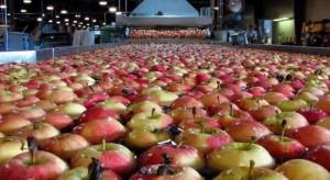KRIR wnioskuje o zmianę rozporządzenia dot. pomocy dla producentów owoców